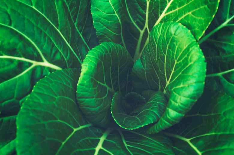 Green leaf.jpeg